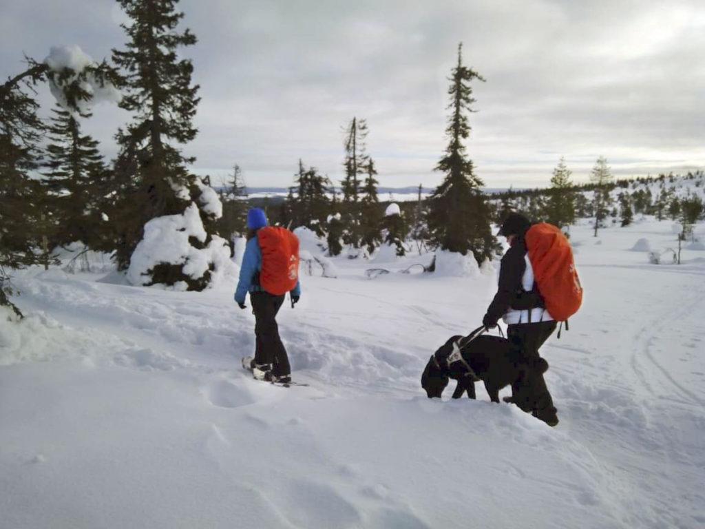 Polku Riisitunturille käy lumista vaaran rinnettä, harvassa kasvavien matalakasvuisten havupuiden lomassa. Kuvassa Miina, Heidi ja Otto.