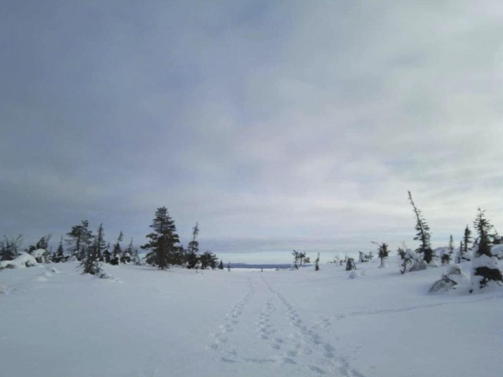 Jään ja lumen peittämä Ikkunalampi pastellisävyihin verhotun taivaan alla. On koittamassa sininen hetki. Luonto nukkuu lumivaipan alla.