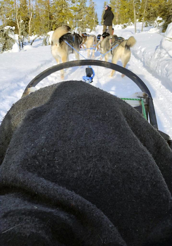 Näkymä kuuden husky-koiran vetämästä reestä aurinkoisella ja lumisella rekiuralla.