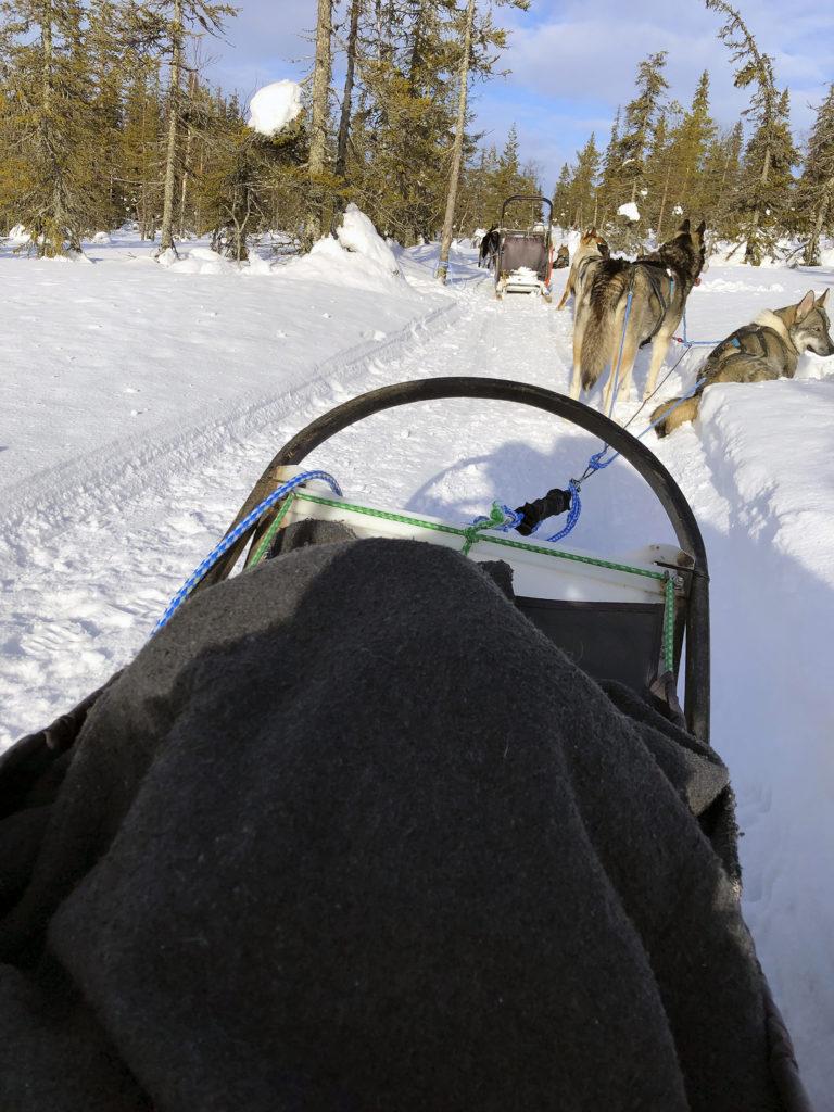 Huskyjen lepotauko valjakkoajelun lomassa aurinkoisessa talvisäässä.