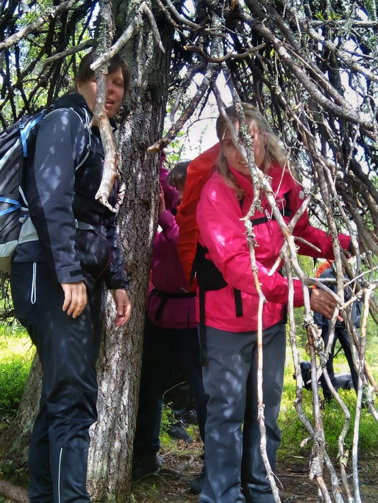 Sini ja Marianne sekä taka-alalla Heidi tutustumassa tapionpöytään eli vanhaan metsäkuuseen jonka oksisto kasvaa vaakatasossa muodostaen majankaltaisen tilan.