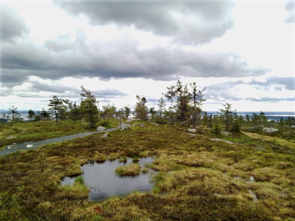Riisitunturin huipulta aukeaa karu näkymä horisonttiin saakka. Tunturin laella kasvaa osin jo tuleentuneita matalakasvuisia heiniä ja ruohoja, loivia rinteitä täplittävät matalat havupuut. Huipulla on pieni lampi josta matalalla roikkuvat tummat pilvet heijastuvat. Matka alas jatkuu kivituhkan peittämää leveää polkua