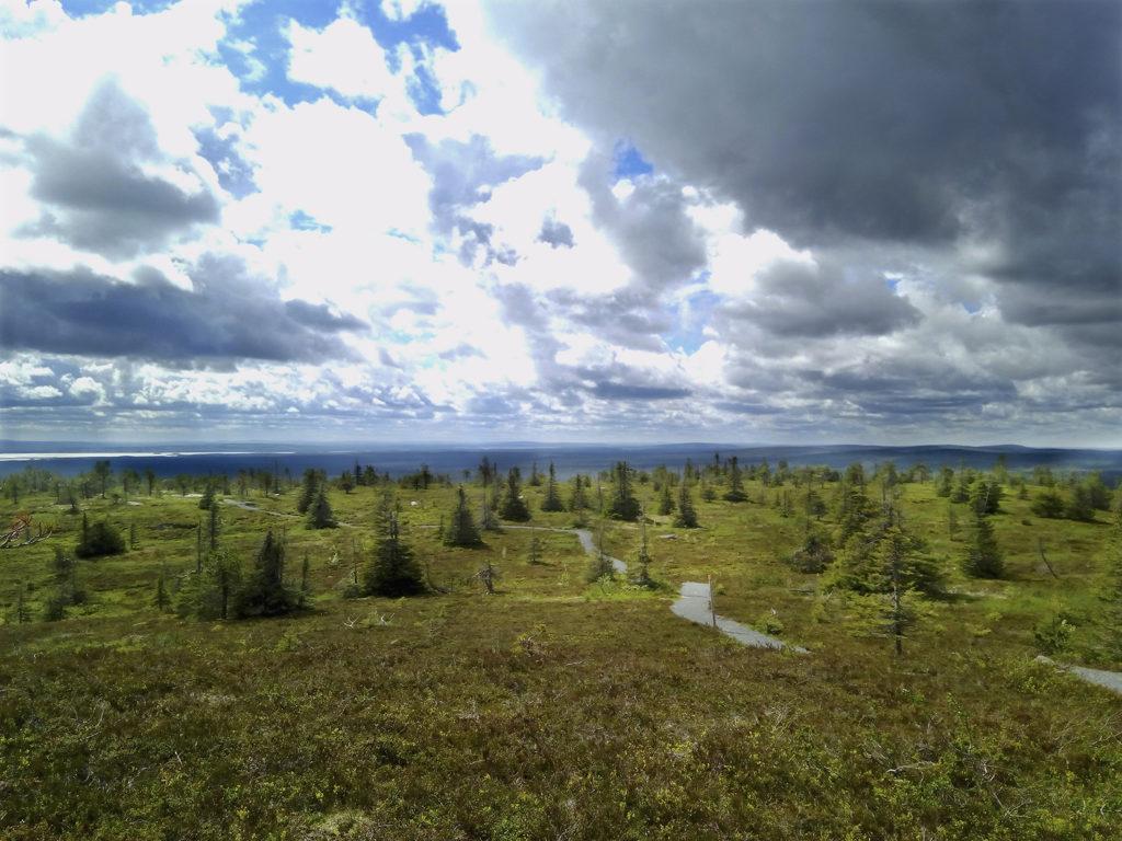 Riisitunturin sammaleenvihreä alarinne tuntuu jatkuvan ikuisuuksiin. Rinteellä siellä täällä kasvavat matalat ja tuuheat kuuset seisovat tunturin tuulia uhmaten kivituhkan peittämän polun johdattaessa kulkijat alas tunturilta. Horisontissa sinertää kaukaisia tunturin lakia. Matalalla roikkuvat pilvet uhkaavat sateella. Pilvien välistä pilkistää aurinko.