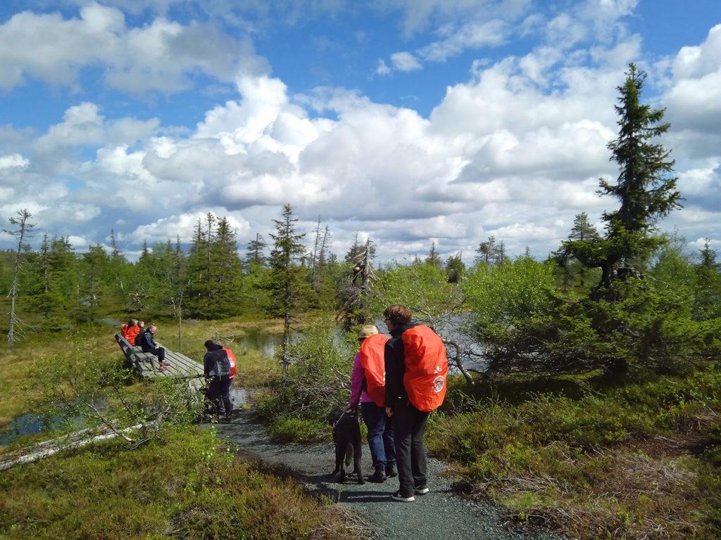 Seikkailuryhmä saapumassa Ikkunalammen levähdystasanteelle matalakasvuisen havumetsikön suojista. Tasanteelle kuljetaan pienen matkaa pitkosten yli. Osa vielä odottaa vuoroaan.