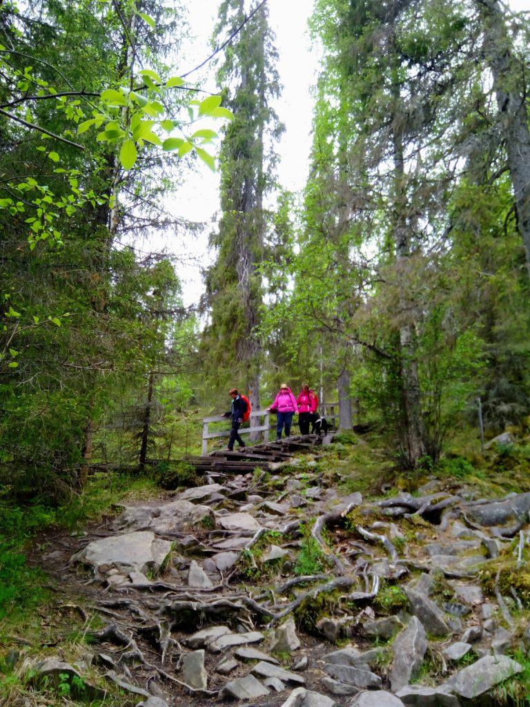 Teräväsärmäisten kivien ja juurien peittämä rinne ja sen takana portaat joita pitkin ovat laskeutumassa Sirpa, Heidi, Tuulikki ja Otto. Ympärillä korkeita ja suoria puita.