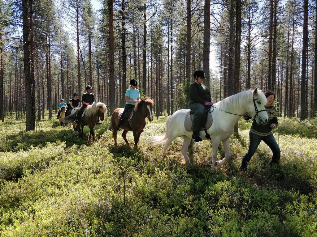 Ratsukot taivaltavat harvan mäntymetsän suojissa. Maa on tuuhean varvikon peittämää. Etummaisena Heidi sekä Valkyrjaa taluttava Mirva, muut letkassa perässä.