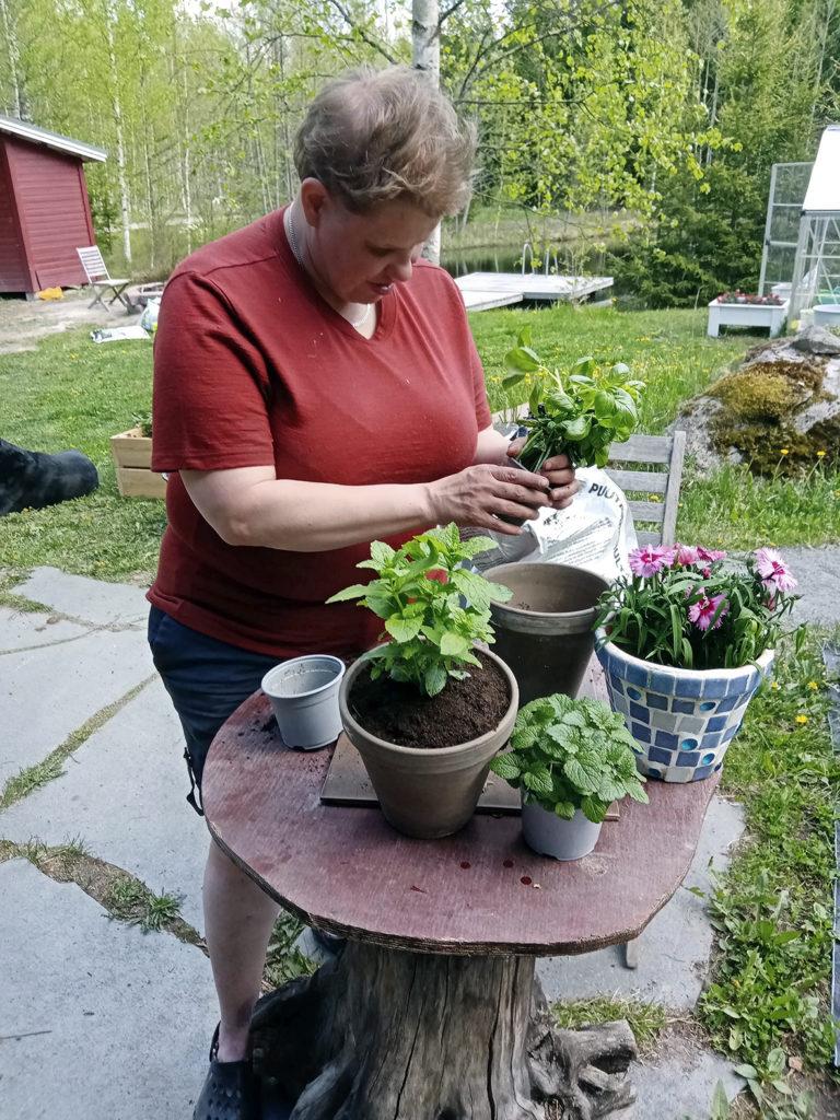 Heidi istuttaa parhaillaan basilikaa mökin pihalla. Valmiina omissa ruukuissaan ovat jo mittu sekä neilikka. Taustalla viheriöivä piha ja kaunis lampi.